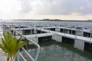 Gills N Claws  Aquaculture Farm  – Singapore